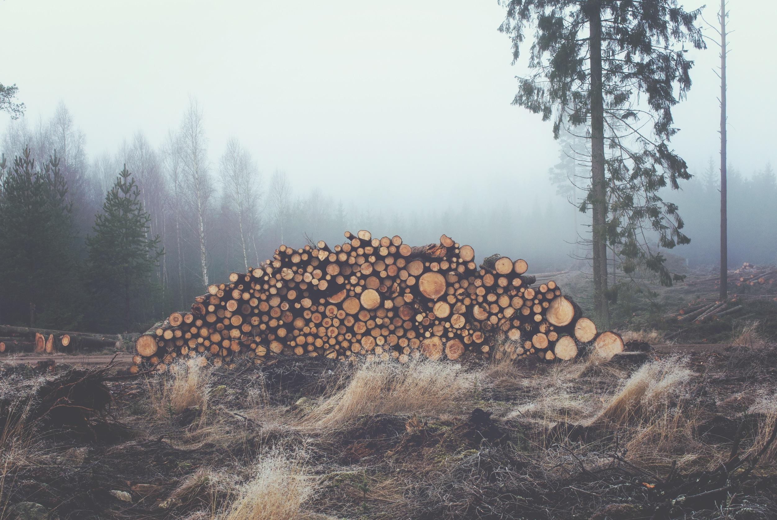 sad-trees